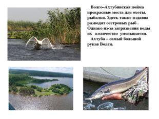 Волго–Ахтубинская пойма прекрасные места для охоты, рыбалки. Здесь также изд
