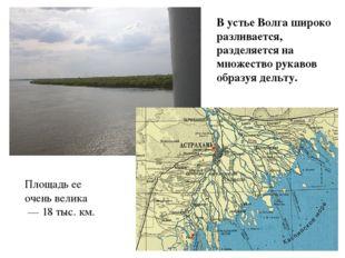 В устье Волга широко разливается, разделяется на множество рукавов образуя де
