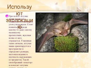 Используют эхолокацию При полете летучие мыши издают не слышимые человечески