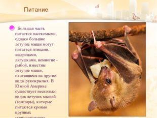 Питание   Большая часть питается насекомыми, однако большие летучие мыши мог