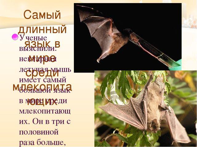 Самый длинный язык в мире среди млекопитающих Ученые выяснили: нектарная лет...