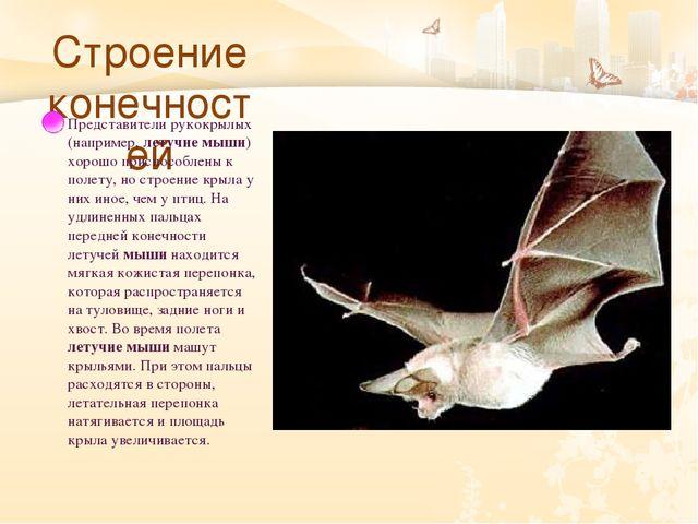 Строение конечностей Представители рукокрылых (например, летучие мыши) хорош...