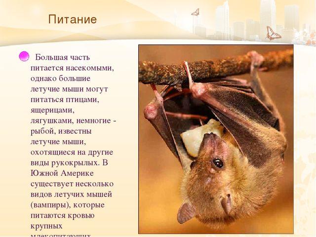 Питание   Большая часть питается насекомыми, однако большие летучие мыши мог...
