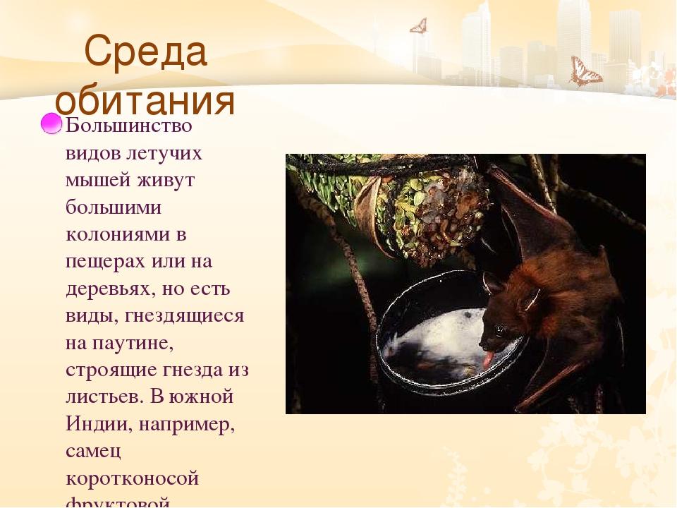 Среда обитания Большинство видов летучих мышей живут большими колониями в пе...