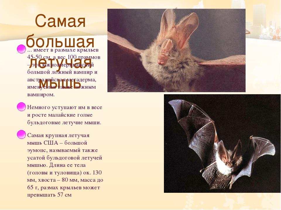 Самая большая летучая мышь ... имеет в размахе крыльев 45-50 см, а вес 100 г...