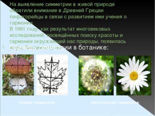 На выявление симметрии в живой природе обратили внимание в Древней Греции пиф