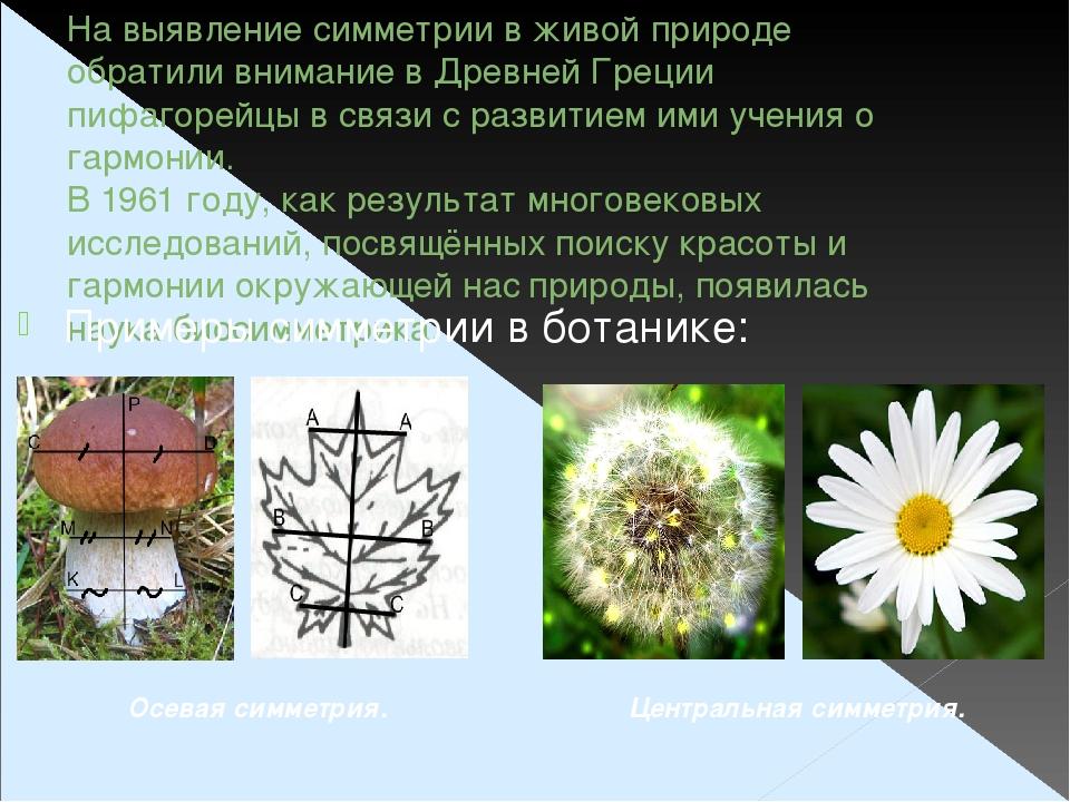На выявление симметрии в живой природе обратили внимание в Древней Греции пиф...