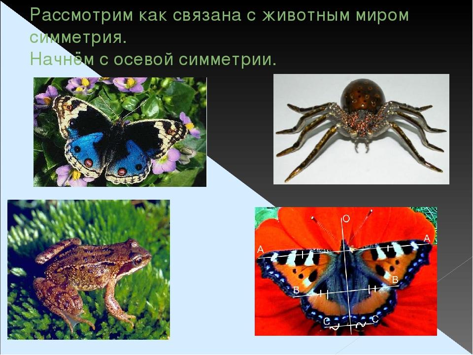 Рассмотрим как связана с животным миром симметрия. Начнём с осевой симметрии.