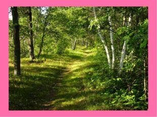 Лес — отличное место отдыха. Он привлекает к себе любителей собирать грибы, я