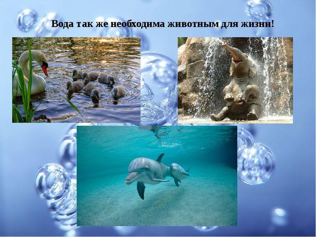 Вода так же необходима животным для жизни!