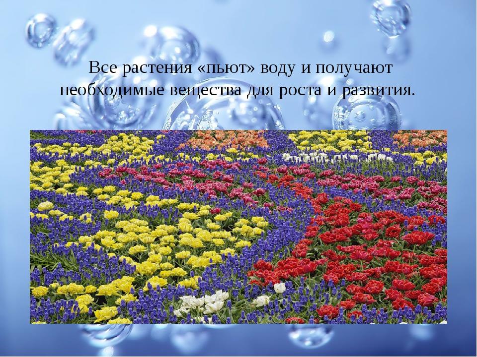 Все растения «пьют» воду и получают необходимые вещества для роста и развития.