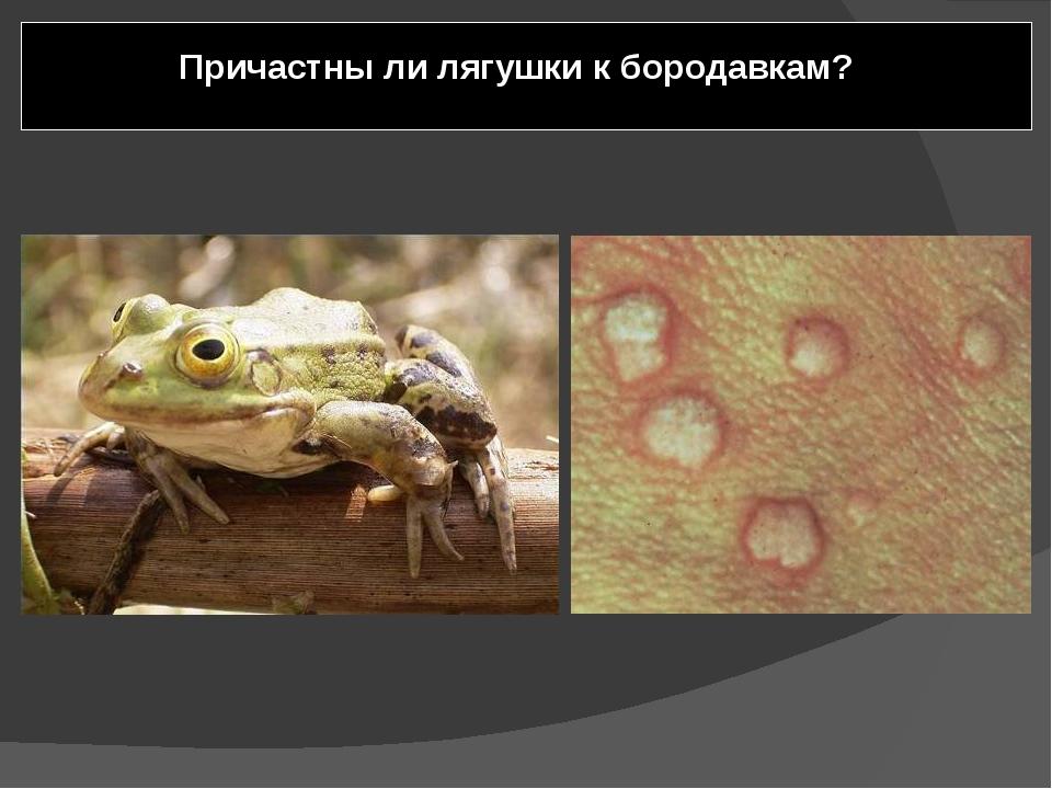 Причастны ли лягушки к бородавкам? Лягушек несправедливо обвиняют в причастн...