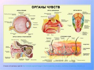 Учение об органах чувств http://vmede.org/sait/?page=13&id=Anatomija_mixailov