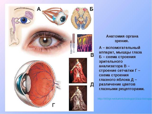http://900igr.net/kartinki/biologija/Glaza-biologija/004-Anatomija-organa-zre...