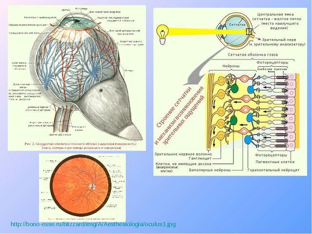 http://bono-esse.ru/blizzard/img/A/Aesthesiologia/oculus1.jpg