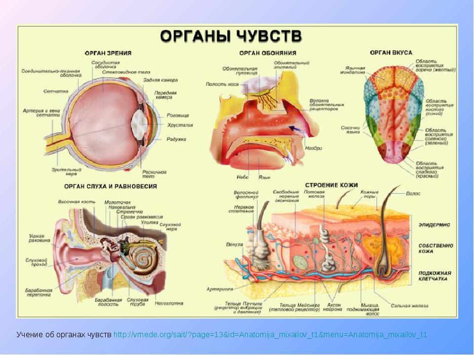 Учение об органах чувств http://vmede.org/sait/?page=13&id=Anatomija_mixailov...