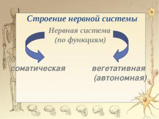 Строение нервной системы Нервная система (по функциям) соматическая вегетатив
