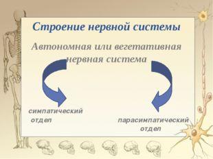 Строение нервной системы Автономная или вегетативная нервная система симпатич