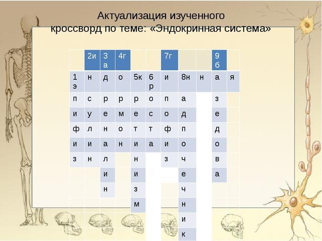 Актуализация изученного кроссворд по теме: «Эндокринная система» 2и 3а 4г 7г...