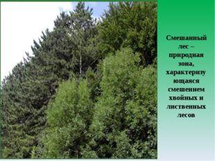 Смешанный лес – природная зона, характеризующаяся смешением хвойных и листвен