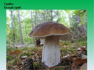 Грибы Белый гриб
