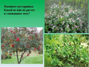 Назовите кустарники. Какой из них не растет в смешанном лесу?