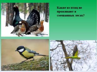 Какие из птиц не проживают в смешанных лесах?