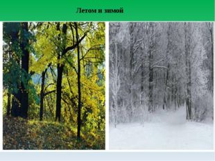 Летом и зимой