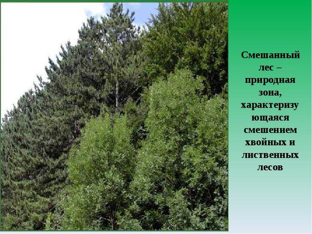 Смешанный лес – природная зона, характеризующаяся смешением хвойных и листвен...