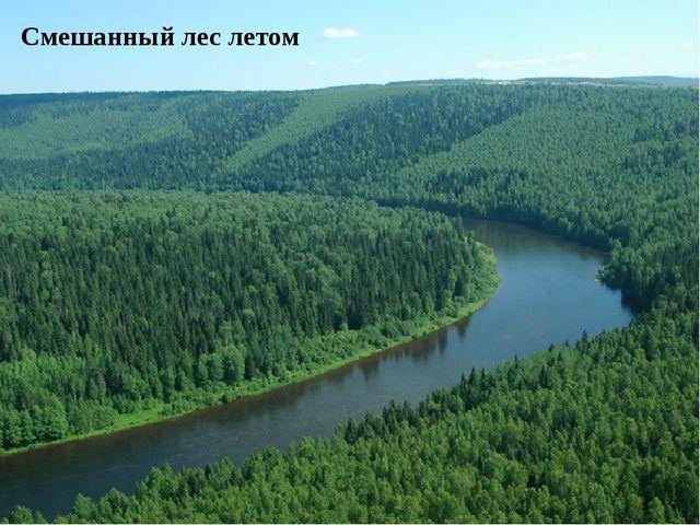 Смешанный лес летом