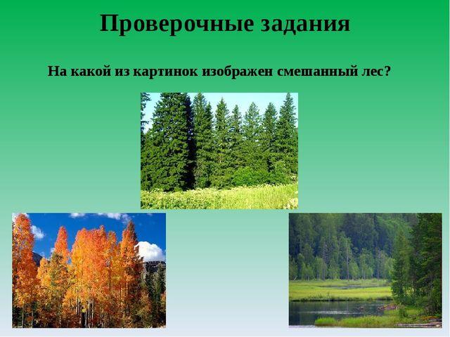 Проверочные задания На какой из картинок изображен смешанный лес?