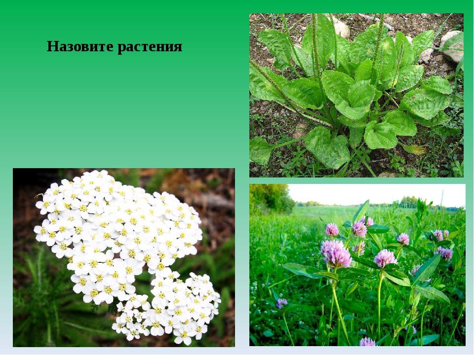 Назовите растения