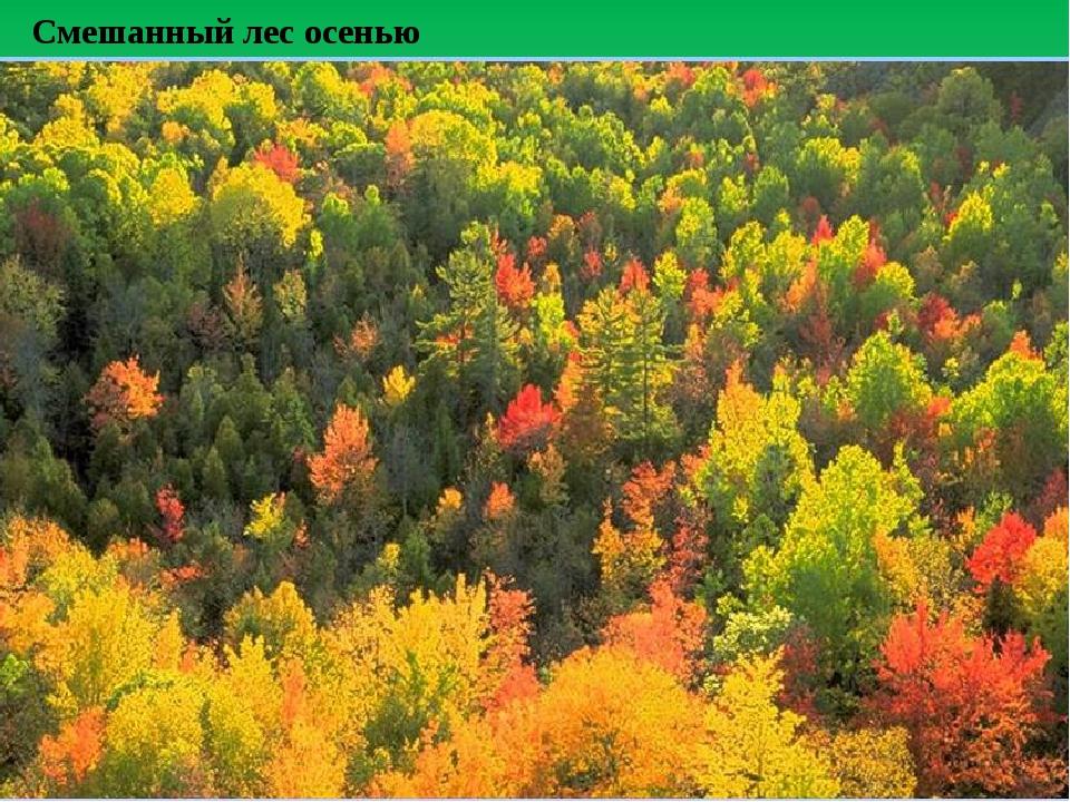 Смешанный лес осенью