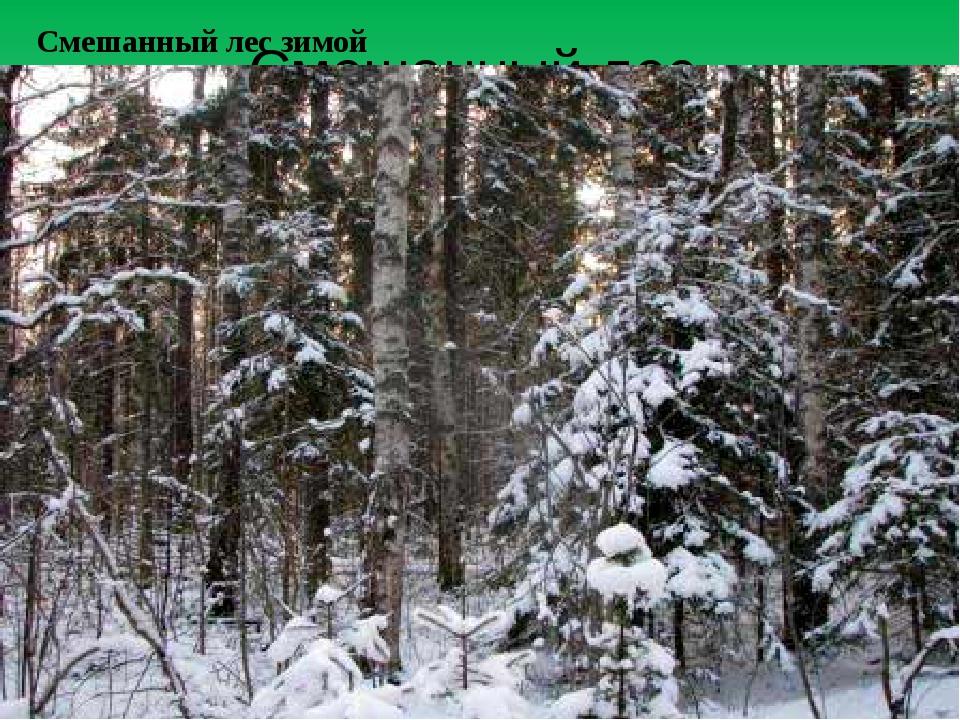 Смешанный лес Смешанный лес зимой