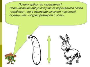 Почему арбуз так называется? Свое название арбуз получил от персидского слов