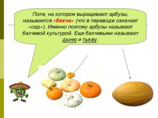 Поле, на котором выращивают арбузы, называется «бахча» (что в переводе означа