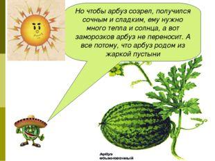 Но чтобы арбуз созрел, получился сочным и сладким, ему нужно много тепла и со