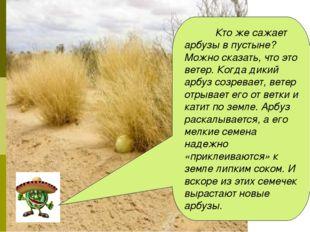 Кто же сажает арбузы в пустыне? Можно сказать, что это ветер. Когда дикий ар