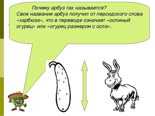Почему арбуз так называется? Свое название арбуз получил от персидского слов...