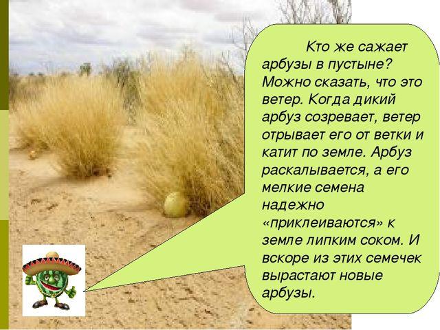 Кто же сажает арбузы в пустыне? Можно сказать, что это ветер. Когда дикий ар...