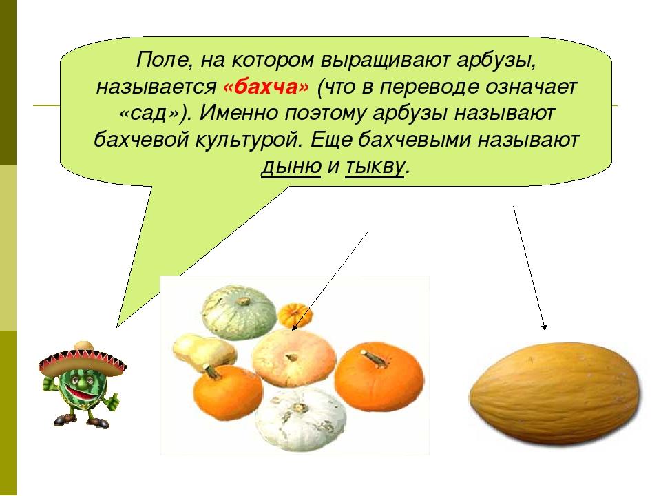 Поле, на котором выращивают арбузы, называется «бахча» (что в переводе означа...