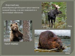 Животный мир разнообразен,преобладают представители таежной фауны, а на юге