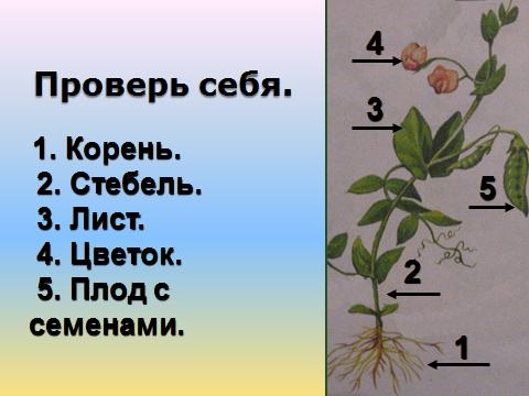 hello_html_5bfc6d4e.png