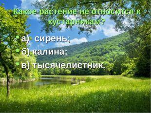 Какое растение не относится к кустарникам? а) сирень; б) калина; в) тысячелис