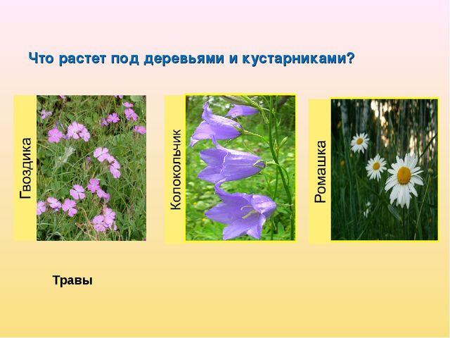 Что растет под деревьями и кустарниками? Травы