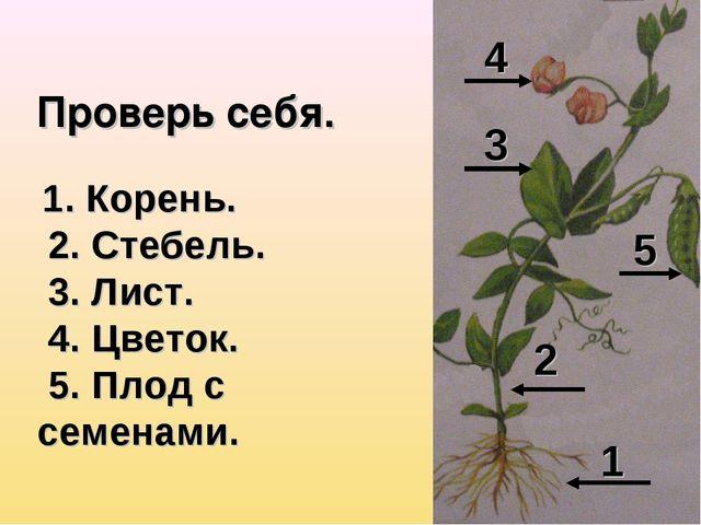 Проверь себя. 1 2 3 4 5 1. Корень. 2. Стебель. 3. Лист. 4. Цветок. 5. Плод с...