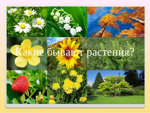 Какие бывают растения?