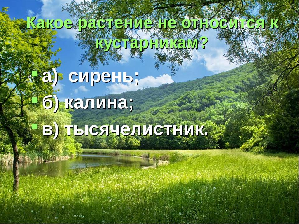 Какое растение не относится к кустарникам? а) сирень; б) калина; в) тысячелис...
