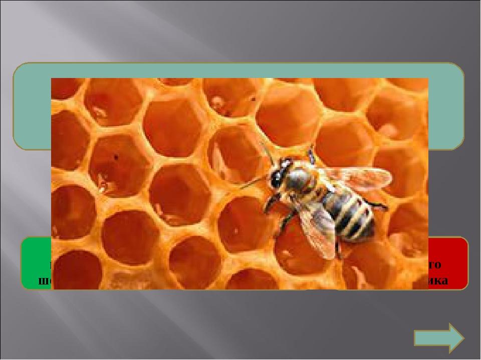 4. Какую форму имеют соты пчел и ос? Форму правильного пятиугольника Форму п...