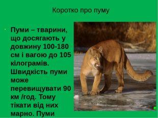 Коротко про пуму Пуми– тварини, що досягають у довжину 100-180 см і вагою до